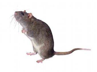 Экспериментальный препарат защитил нейроны паркинсоников