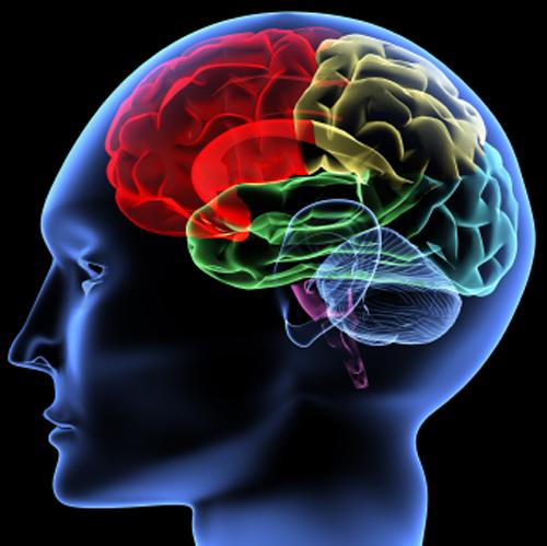 Части мозга могут развиваться сами по себе