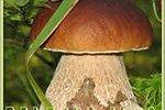 Белый гриб помогает сердцу