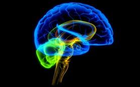 Ученые наконец узнали, как учится мозг