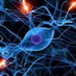Как иммунные клетки влияют на рост нервных окончаний
