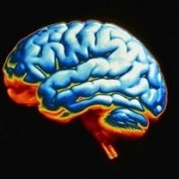У женщин кофе увеличивает активность мозга, а у мужчин – замедляет
