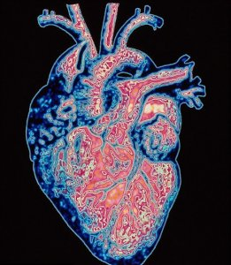 Сердечную недостаточность вылечит имплант в ягодицах