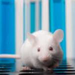 Развитие рассеянного склероза у мышей остановили с помощью наночастиц