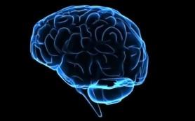 Составлена карта боли в мозге человека