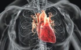 Новые данные о регенерации клеток сердечной мышцы