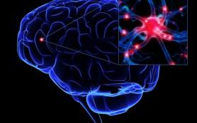 В головном мозге найден новый вид нейронов — они контролируют сердечный ритм и кровяное давление