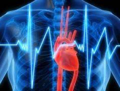 «Быстрое» сердце приводит к быстрой смерти