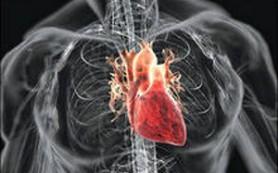 Ученые обнаружили генетический «выключатель» сердечных заболеваний