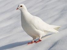 Мозг человека удивил исследователей своим сходством с птичьим