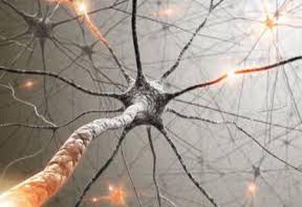 Разработано потенциальное диетическое питание для лечения детских нейродегенеративных заболеваний
