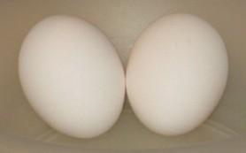 Большие яички оказались фактором риска сердечно-сосудистых заболеваний