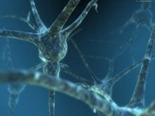Генетики выяснили, как именно образуются новые нервные клетки