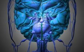 Холестерин защищает мозговые нервы, утверждают ученые