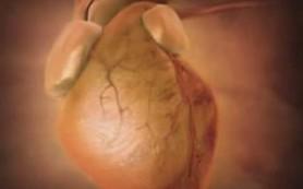 Отказ от углеводов и упор на белки с жирами вредят сердцу