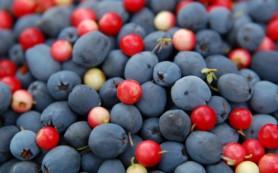 Всего одна порция ягод в неделю защитит мозг от возрастных изменений
