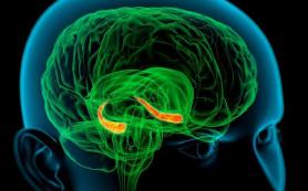 Мозговые аномалии могут вызывать анорексию