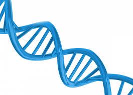 Найден ген, отвечающий за умственное развитие