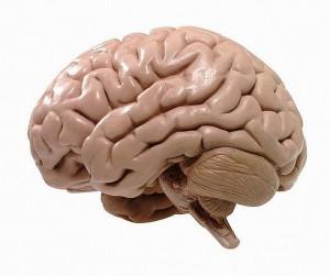hersenen kinderen