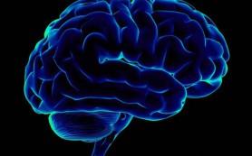 Мозг пожилого человека работает так же быстро, как и у молодого