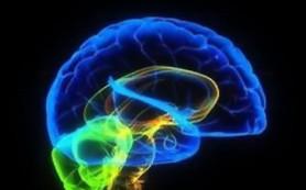 Жирная пища приводит к образованию рубцов в мозге, установил анализ