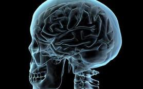 Мозг смягчает чувство обиды, выделяя опиоиды