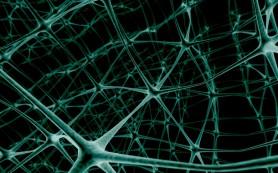 Обнаружен механизм взаимного выключения нейронных сетей
