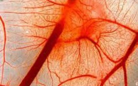 Что способствует восстановлению эластичности кровеносных сосудов