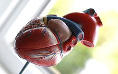 В праздничные дни москвичи получат возможность бесплатно проверить сердце