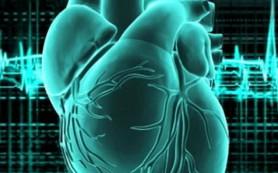 В Новосибирске будет налажено производство сердечных имплантатов