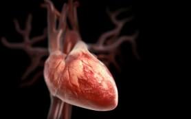 Опробована эндоскопическая замена аортального клапана