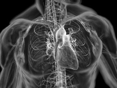 Эластичные мембраны помогут предотвратить развитие инфаркта