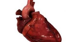 Задача максимум – заставить биофициальное сердце работать после создания