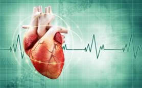 Ученые намерены напечатать живое сердце на 3D-принтере