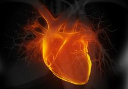 Генная терапия вместо пересадки сердца