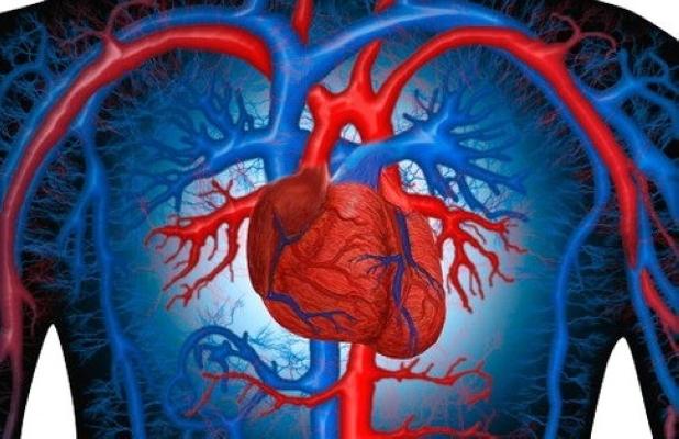 Полезные вещества для здоровья сердца