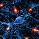 Какие продукты полезны для нервной системы