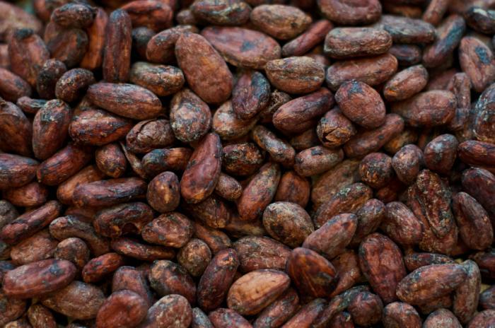 Флавонолы какао связывают с улучшением памяти у пожилых