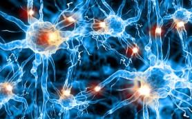 Нервные клетки восстанавливаются после инсульта – ученые