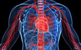 Старение сосудов можно остановить с помощью антиоксидантов