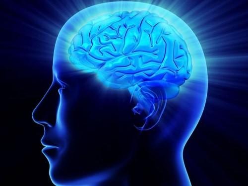 Жирная пища может замедлить старение мозга
