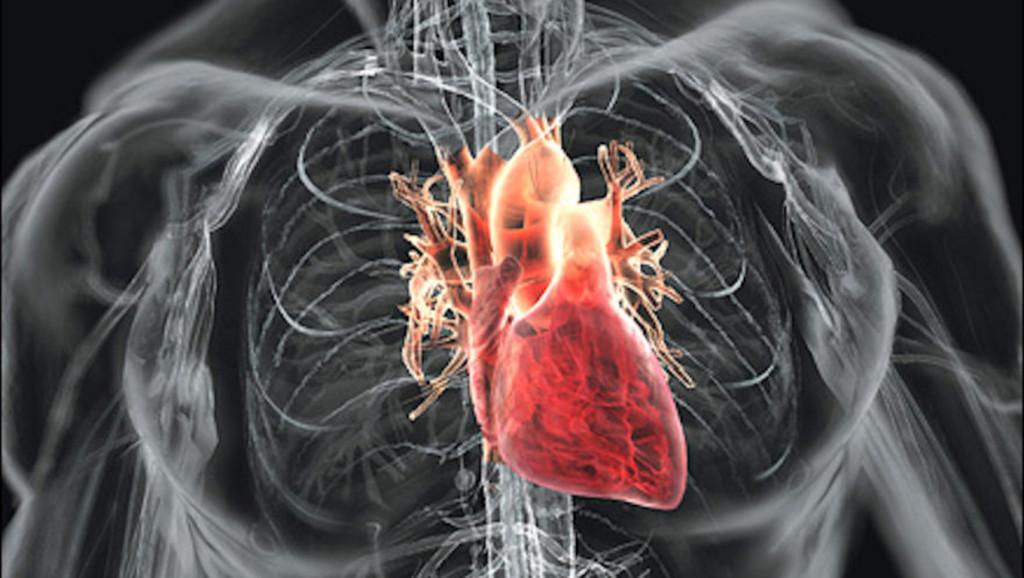 Развеян миф о том, что полнота влияет на сердце