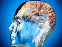 Новый метод поможет понять, как работает мозг