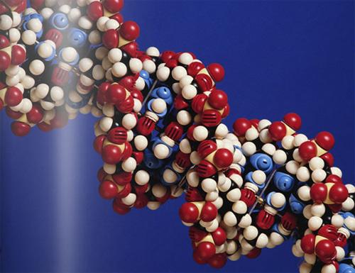 Одна молекула может улучшить память