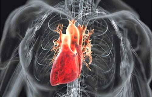 Откуда берутся приобретенные пороки сердца