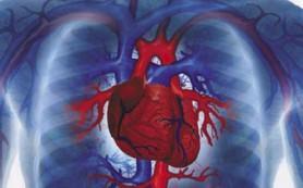 Из каких отделов состоит сердце человека