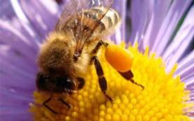 Лечение атеросклероза с помощью продуктов пчеловодства