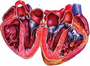 Основные причины возникновения врожденного порока сердца