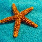 Морские звезды спасут от инсульта