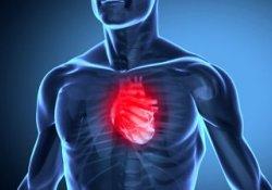 В тканях человеческого сердца обнаружены рецепторы горького вкуса